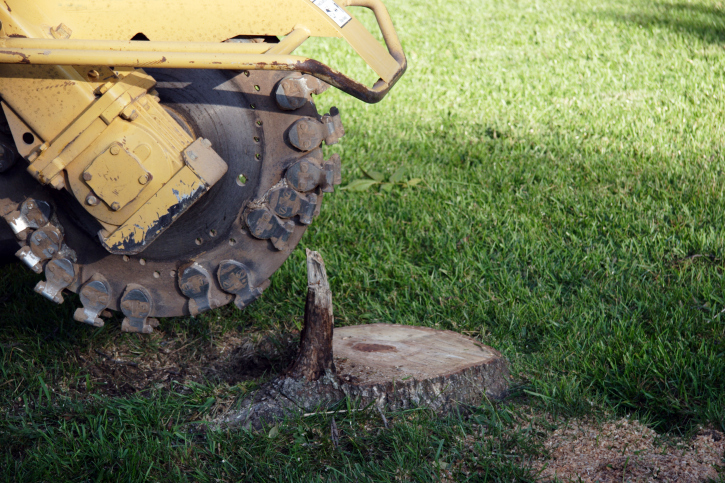 We can help you get rid of that annoying stump in your garden and free up some space!