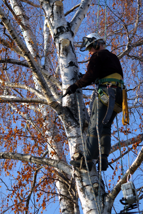 With us, cutting trees down is easy even if they are close to your structure!