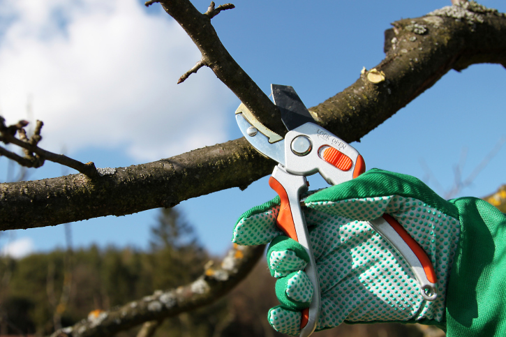 Pruning your trees once a year will enhance their condition and aesthetic apeal